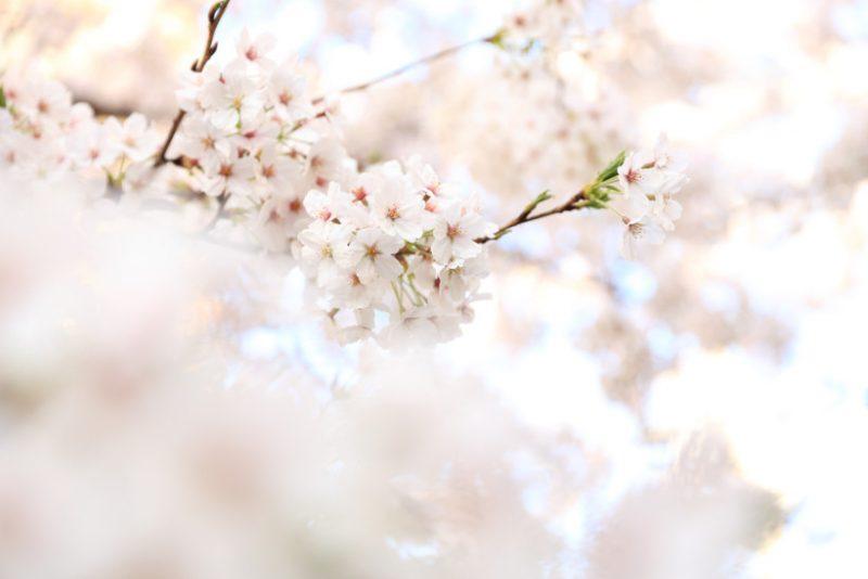 Ayurveda Frühling